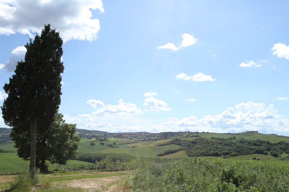 Detail 3 of Tuscan Countryside
