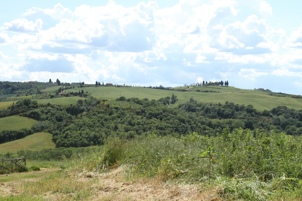 Detail of Tuscan Countryside 5