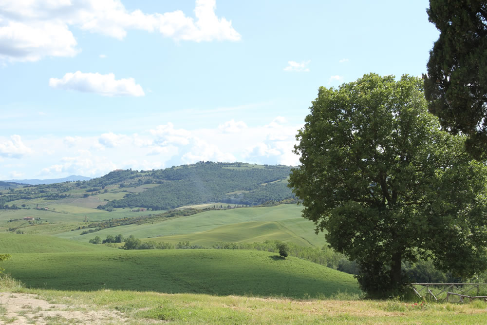 Detail of Tuscan Countryside 6
